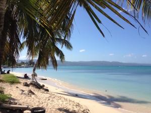 beach palm ocean