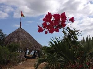 Pinnacle, Rastafari, Gathering, history, flowers, rebuild