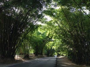 Bamboo avenue Jamaica